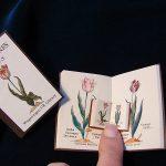 Het Tulpenboek van P Cos uit 1637 in drie maten